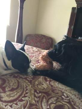 Duchess and Buster 2