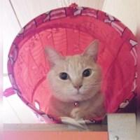 猫がお気に入りのトンネルの中にいます