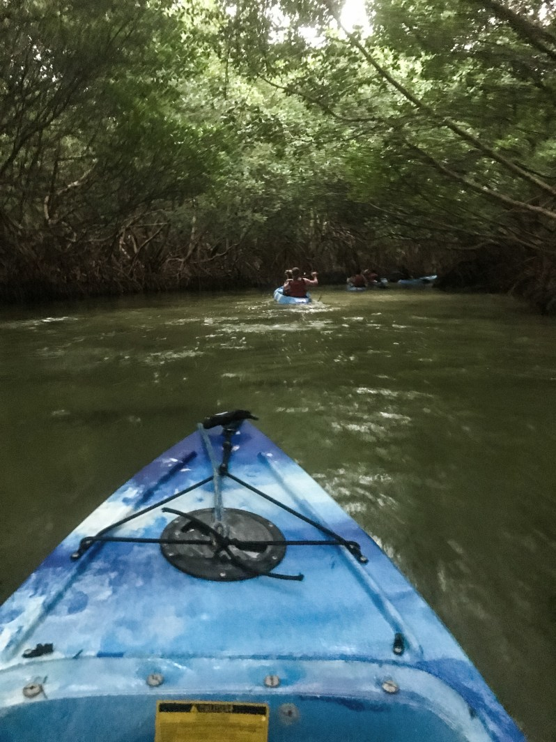 Kayaking in Mangroves in Puerto Rico.JPG