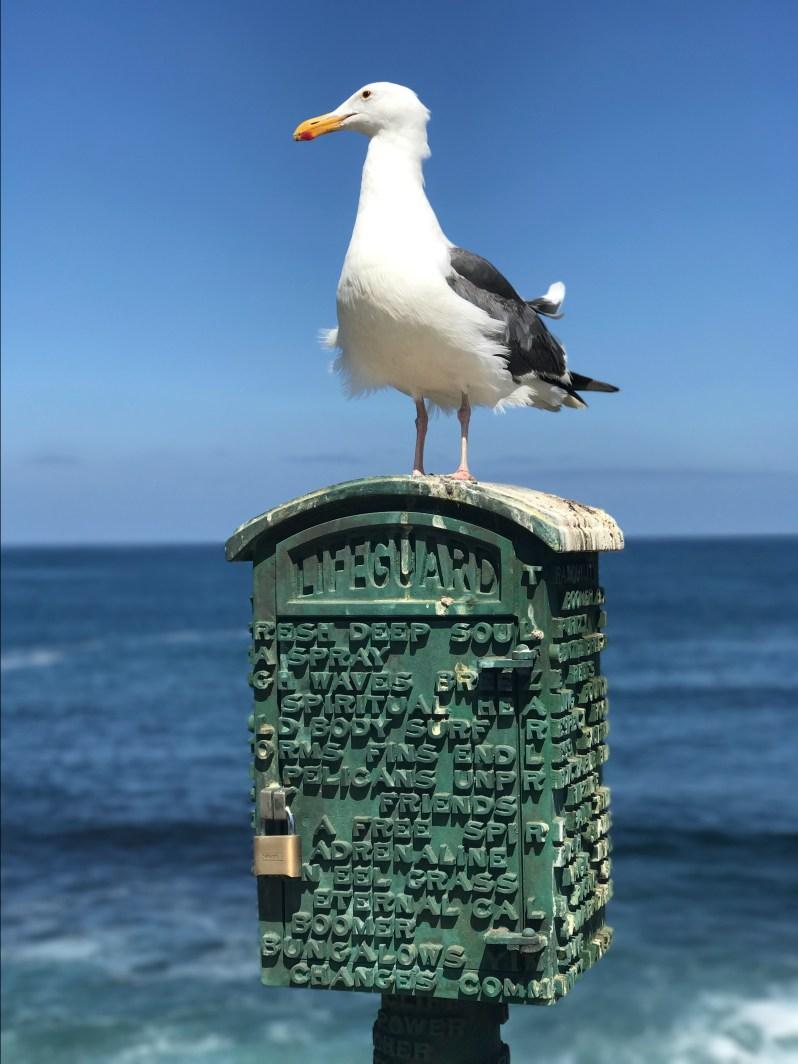 La-Jolla-Cove-Seagull.jpg
