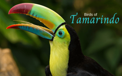 Birds of Tamarindo
