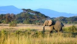 elephant-kili