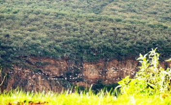hells gate birds-in-the-valley