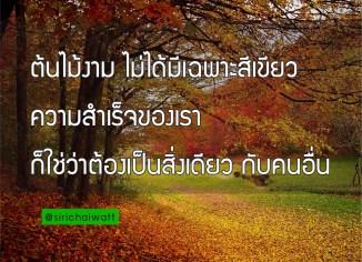 ต้นไม้งาม ไม่ได้มีเฉพาะสีเขียว ความสำเร็จของเรา ก็ใช่ว่าต้องเป็นสิ่งเดียว กับคนอื่น คำคมดีๆ