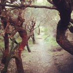 path to tallows