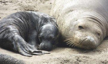 WrinklePup and mom