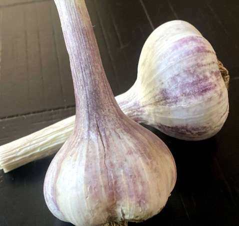 Holistic Garlic
