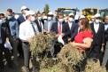 Yer fıstığı üretiminde rekor artış yapan Şırnak'ta şenlikli hasat