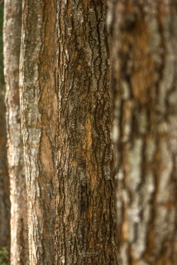 bark detail shot