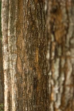 bark detail shot