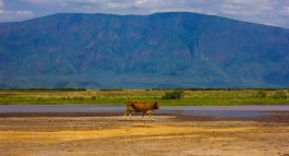 Lake Natron-52