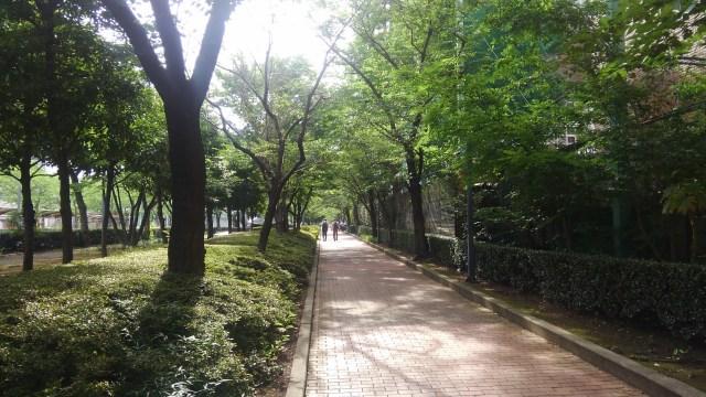 江戸東京博物館横の緑道