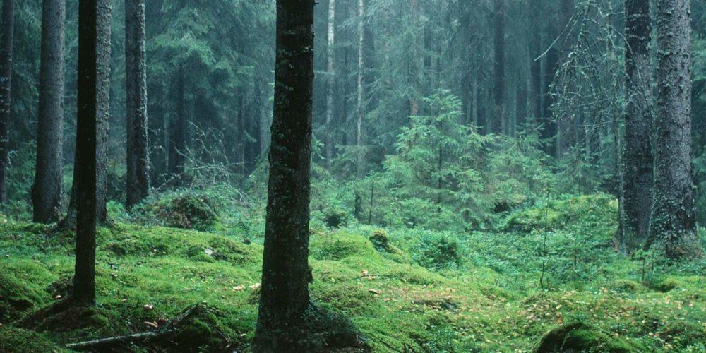 Sirope-Proyectos-Tuomas-Kuure-bosque-branding