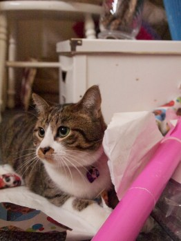 kitty tearing up wrapping paper