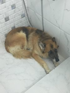 Rifle, not sure why she decided to lay in the shower