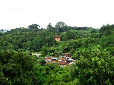 Perkampungan diantara rimbun pepohonan
