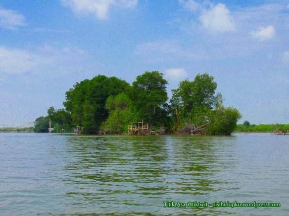 Hutan mangrove.