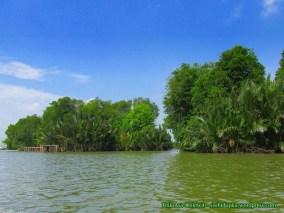 Hutan mangrove_3