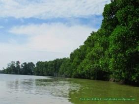 Hutan mangrove_4