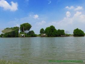 Hutan mangrove_5