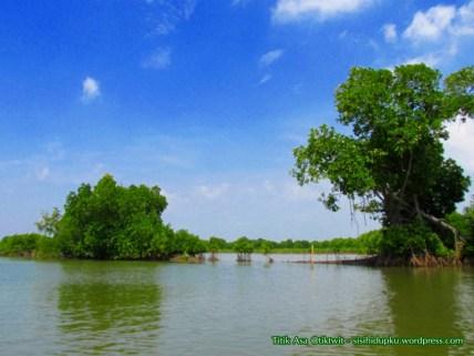 Hutan mangrove_7