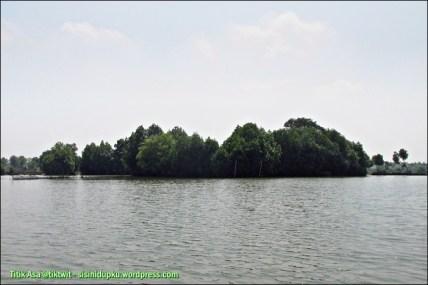 Rimbun hutan mangrove