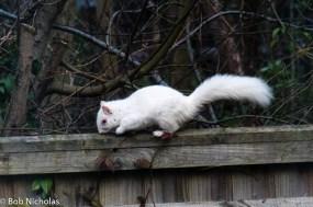 albinosquirrel