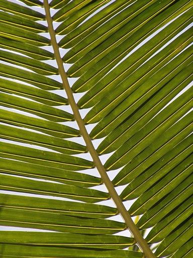 palmier web