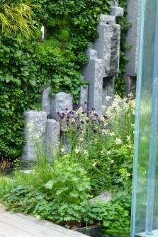 Aquilegias in 'The Mind's Eye' garden