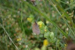 Butterfly nirvana
