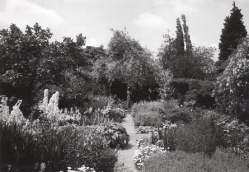 The White Garden showing the young weeping pear tree. Copyright Adam Nicolson
