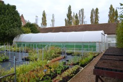 The polytunnels and standing out ground.