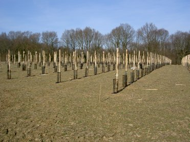 Pic 1 - The orchard soon after planting...