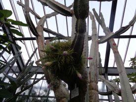 Cactus in December