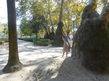 Some really old trees in a park in Porto.