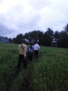oct16-rice