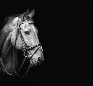 Bridles and Reins