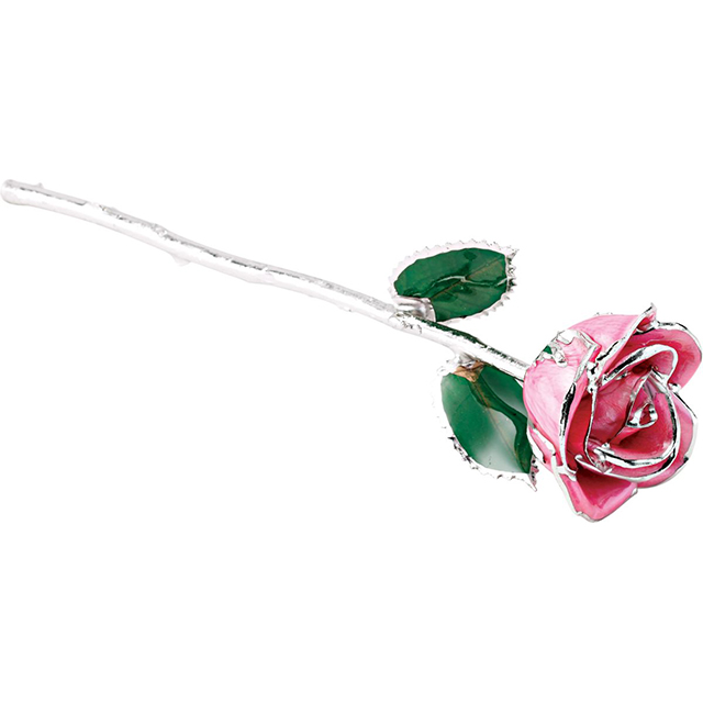 Pink Rose With Platinum Trim