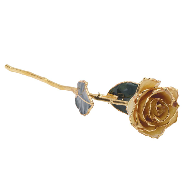 White Rose With Gold Trim