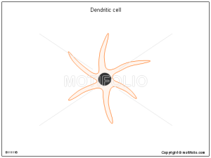 Dendritic cell Illustrations