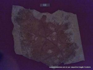 32-Museu de paleontologia (51)