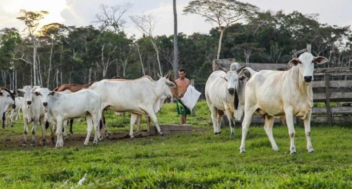 Registro de estabelecimentos e de produtos destinados à alimentação animal passa a ser online
