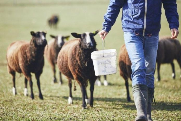 Governo adota medidas para facilitar acesso ao crédito rural durante pandemia