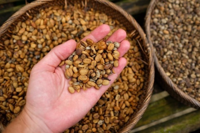 Valor da produção agropecuária é projetado em R$ 703,8 bilhões para 2020
