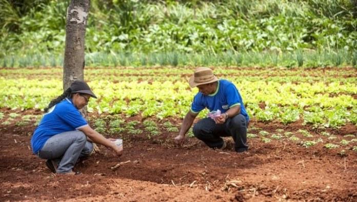 Mais de dez milhões de pessoas do meio rural já receberam auxílio