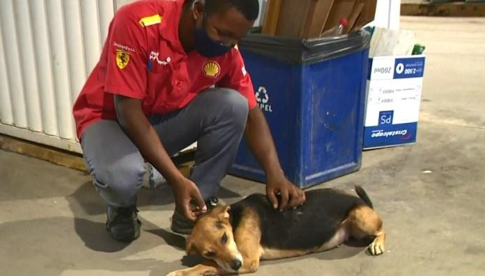 Frentista mima a cachorrinha Pandora no posto de gasolina em Castelo