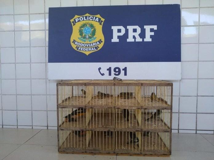 Pássaros foram localizados em porta-malas de carro na BR-101 — Foto: Divulgação/PRF