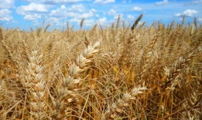 Embrapa dá dicas sobre sementes para os cultivos de inverno