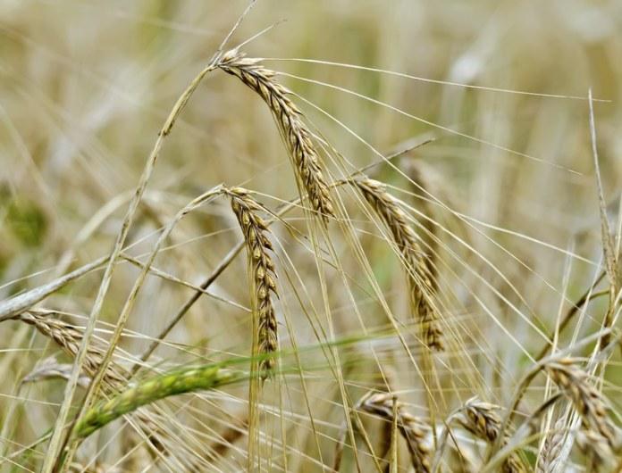 Com supersafra, produção de grãos é estimada em 272 milhões de toneladas