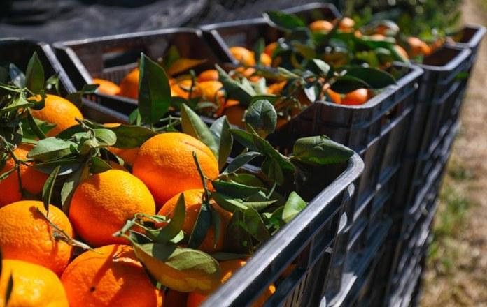Governo reajusta preços mínimos da laranja e do trigo